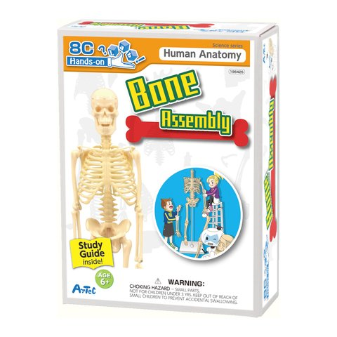 Artec Bone Assembly